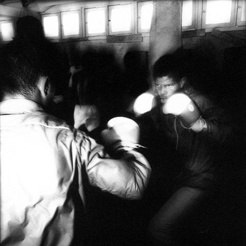 Cuban Boxers 2 von 4 | Wolf Böwig